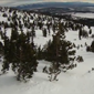 Trees at Mammoth